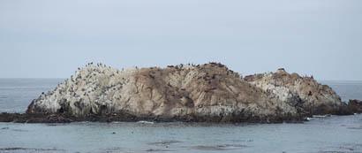Birdrock