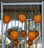 Persimmon_dry