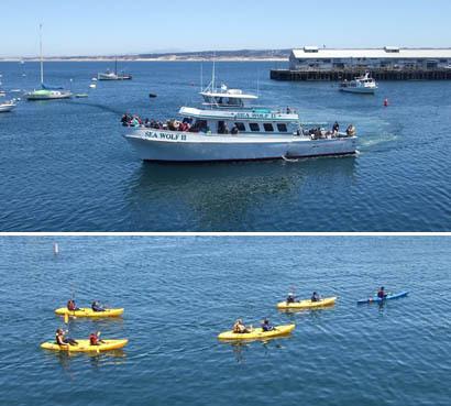Montereysea