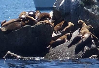 Montereyseal