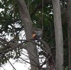 Squirrel_p