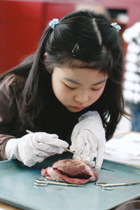 Heartdissection