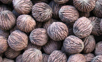 Black_walnuts