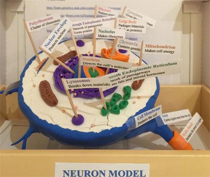 Neuronmodel1